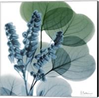 Framed Lilly Of Eucalyptus