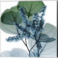Framed Lilly Of Eucalyptus 2