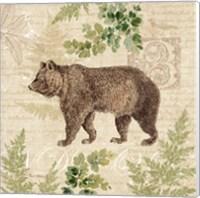 Framed Woodland Trail II (Bear)
