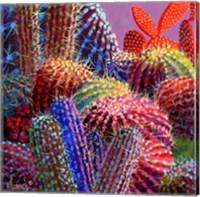 Framed Barrel Cactus 4