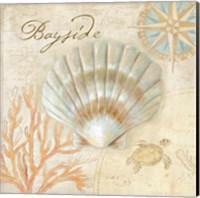 Framed Nautical Shells II