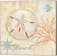 Framed Nautical Shells IV
