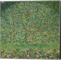 Framed Apple Tree  I, 1912
