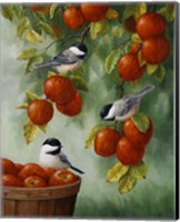 Framed Apple Harvest Chickadees