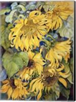 Framed Cascading Sunflowers