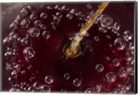 Framed Marroon Fruit Closeup With Raindrops I