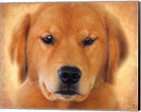 Framed Golden Retriever Portrait