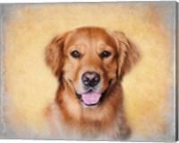Framed Young Golden Retriever Portrait