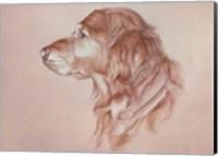 Framed Dog Eight
