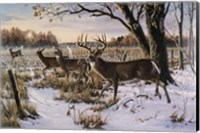 Framed Cautious Crossing - Whitetails
