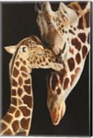 Framed Giraffes First Kiss