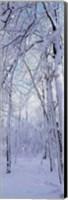 Framed Winter Forest