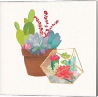 Framed Succulent Garden II
