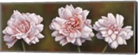 Framed Summer Blossoms 5