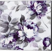 Framed Scent of Roses Plum II