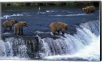 Framed Group of Brown Bears in Lake