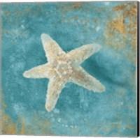 Framed Treasures from the Sea IV Aqua
