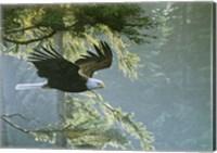 Framed Forest Flight / Eagle