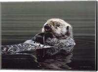 Framed Just Resting - Sea Otter