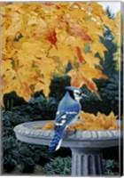 Framed Autumn Birdbath