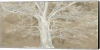 Framed White Oak