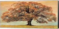 Framed Oak