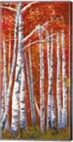 Framed Betulle III