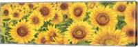 Framed Field of Sunflowers