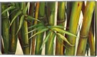 Framed Bamboo on Beige II