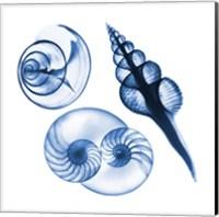 Framed Blue Shells Two