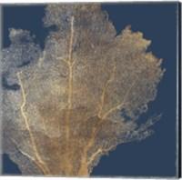 Framed Gold Coral I