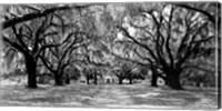 Framed Avenue of Oaks, South Carolina