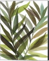 Framed Tropical Greens I