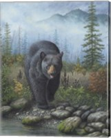 Framed Smoky Mountain Black Bear