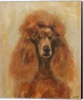 Framed Apricot Poodle