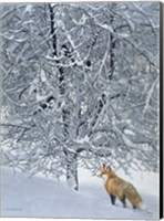 Framed Fox In Snow