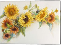 Framed Arch of Sunflowers
