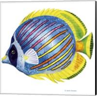 Framed Fish 1 Blue-Yellow