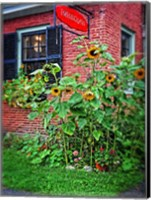 Framed Country Store Sunflowers