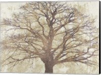 Framed Sacred Oak