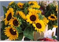 Framed Market Sunflowers, Nice, France