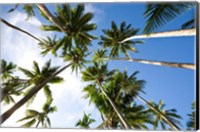 Framed Coconut palm grove, Lavena Village, Taveuni, Fiji