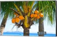 Framed Falling coconut sign, Taveuni, Fiji
