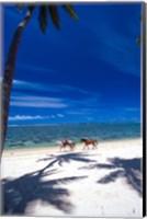 Framed Palm Trees and Horses, Tambua Sands, Coral Coast, Fiji