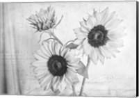 Framed Sunflowers2 BW