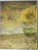Framed Dear Sunflower Field
