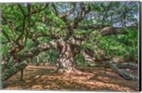 Framed Angel Oak