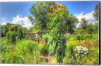 Framed Sunflowers and Garden