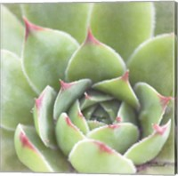 Framed Garden Succulents III Color