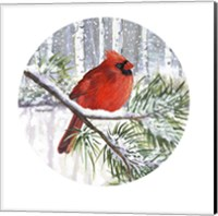 Framed Winter Wonder Male Cardinal